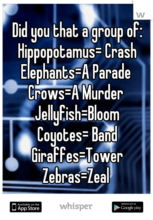 Did you that a group of: Hippopotamus= Crash Elephants=A Parade  Crows=A Murder  Jellyfish=Bloom Coyotes= Band Giraffes=Tower Zebras=Zeal