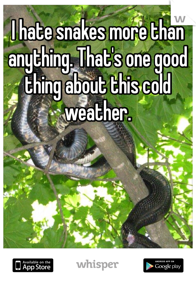 I hate snakes more than anything. That's one good thing about this cold weather.
