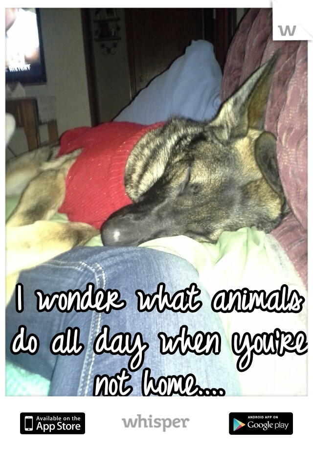 I wonder what animals do all day when you're not home....