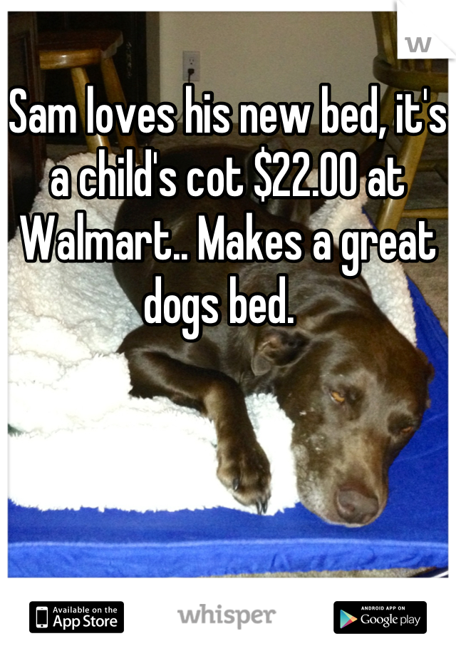 Sam loves his new bed, it's a child's cot $22.00 at Walmart.. Makes a great dogs bed.