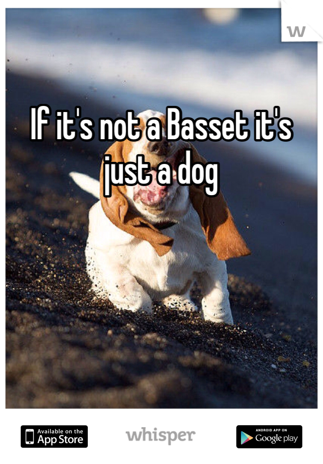 If it's not a Basset it's just a dog