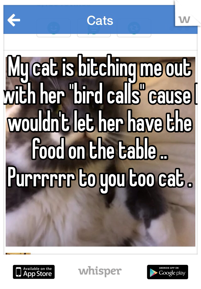 """My cat is bitching me out with her """"bird calls"""" cause I wouldn't let her have the food on the table .. Purrrrrr to you too cat ."""