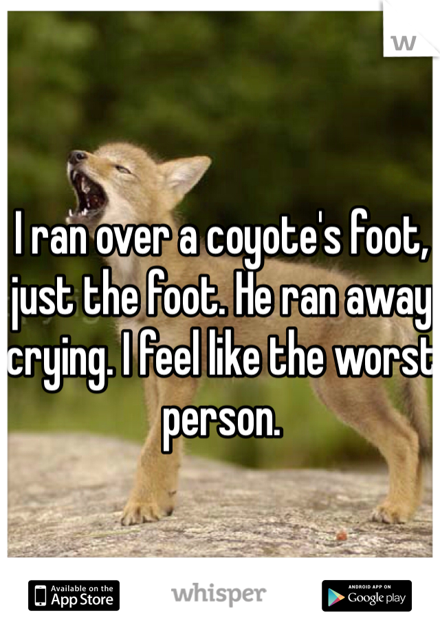 I ran over a coyote's foot, just the foot. He ran away crying. I feel like the worst person.