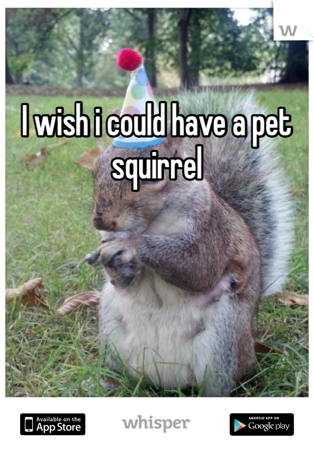I wish i could have a pet squirrel