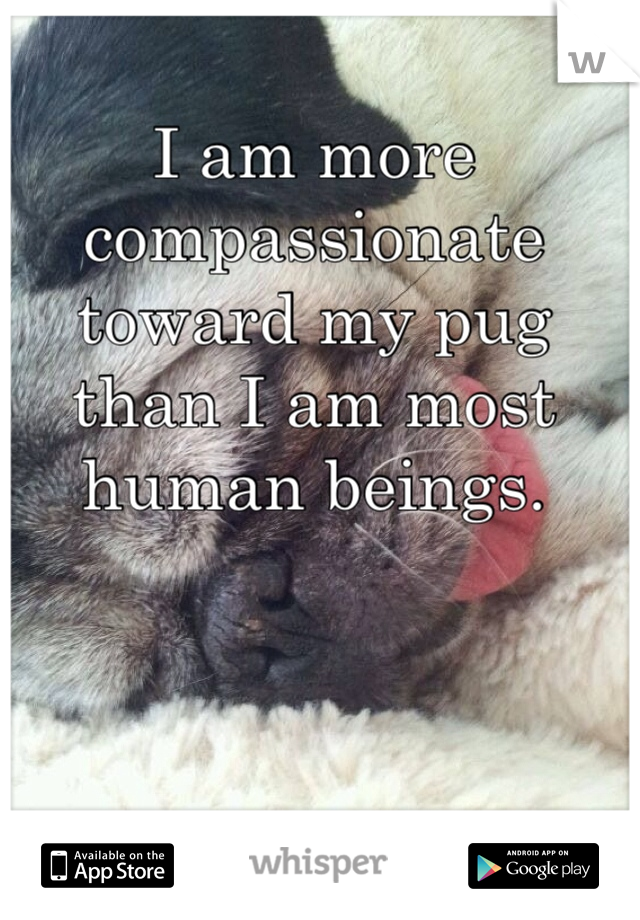 I am more compassionate toward my pug than I am most human beings.