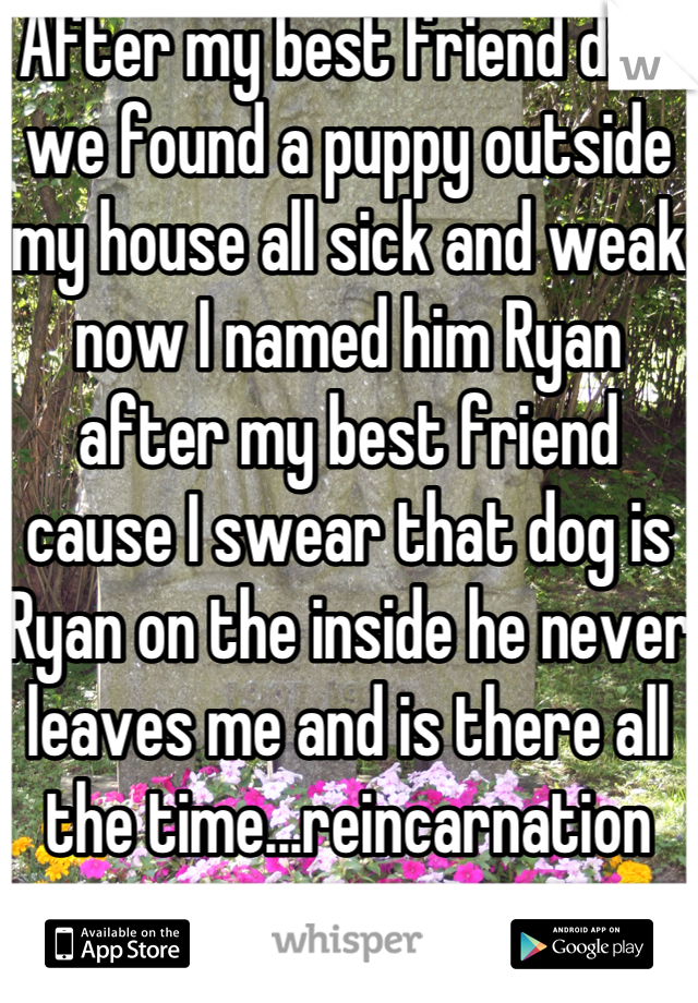 After my best friend died we found a puppy outside my house all sick and weak now I named him Ryan after my best friend cause I swear that dog is Ryan on the inside he never leaves me and is there all the time...reincarnation