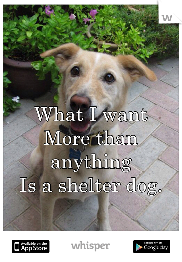 What I want More than anything Is a shelter dog.