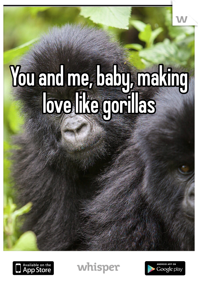 You and me, baby, making love like gorillas