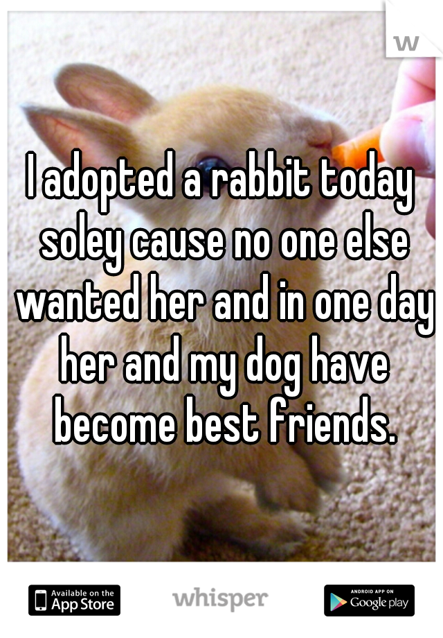 I adopted a rabbit today soley cause no one else wanted her and in one day her and my dog have become best friends.
