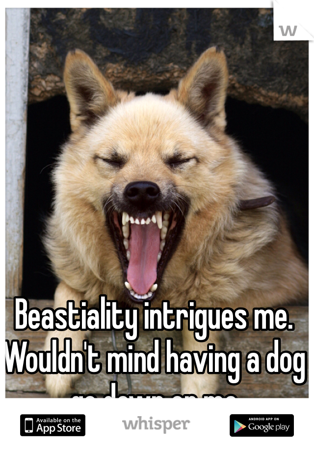 Beastiality intrigues me. Wouldn't mind having a dog go down on me