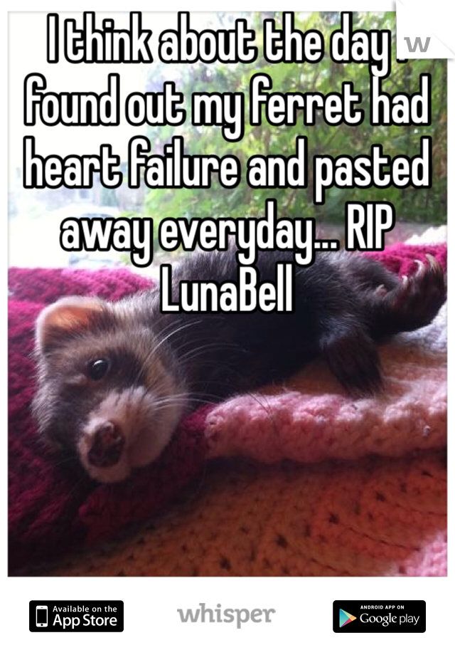 I think about the day I found out my ferret had heart failure and pasted away everyday... RIP LunaBell
