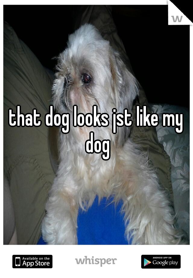 that dog looks jst like my dog
