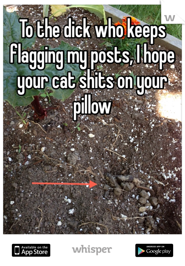 To the dick who keeps flagging my posts, I hope your cat shits on your pillow