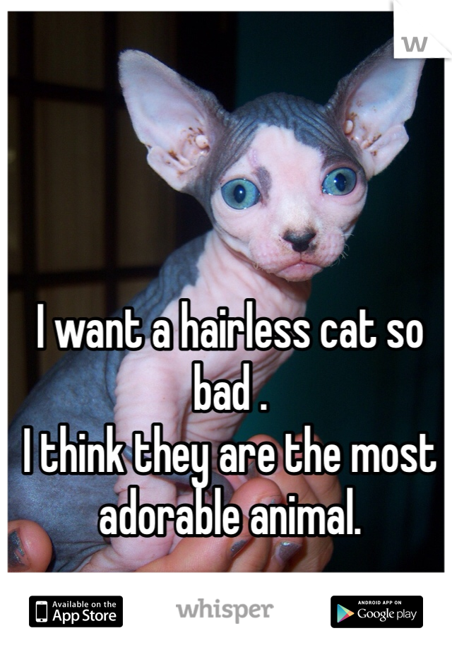 I want a hairless cat so bad . I think they are the most adorable animal.