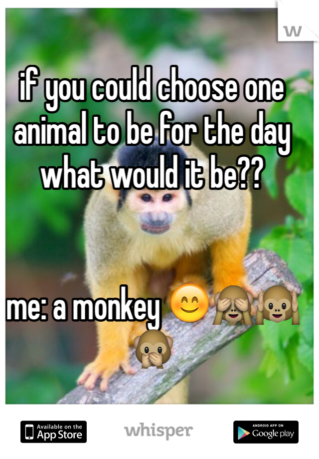 if you could choose one animal to be for the day what would it be??   me: a monkey 😊🙈🙉🙊
