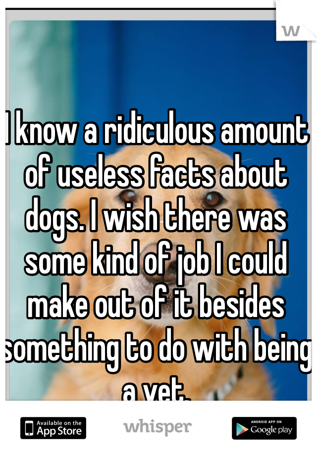 I know a ridiculous amount of useless facts about dogs. I wish there was some kind of job I could make out of it besides something to do with being a vet.