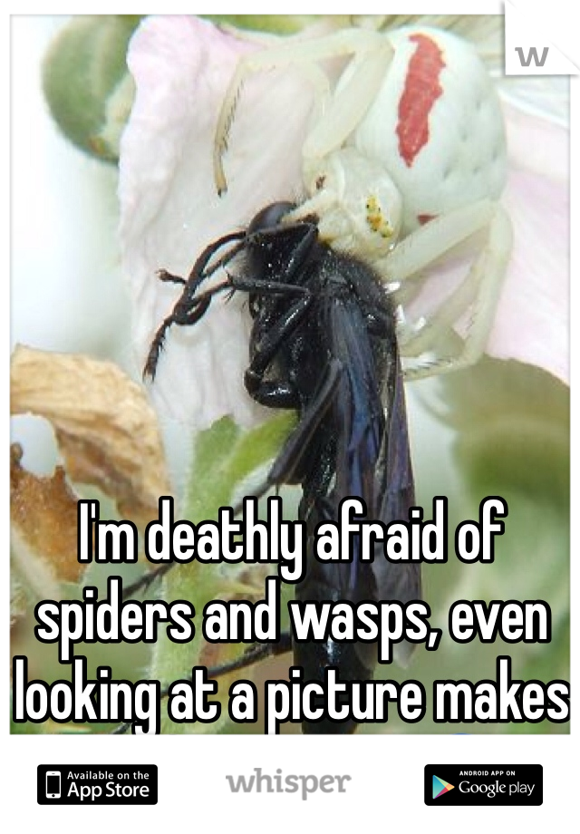 I'm deathly afraid of spiders and wasps, even looking at a picture makes me feel uneasy. 😰