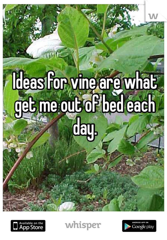 Ideas for vine are what get me out of bed each day.