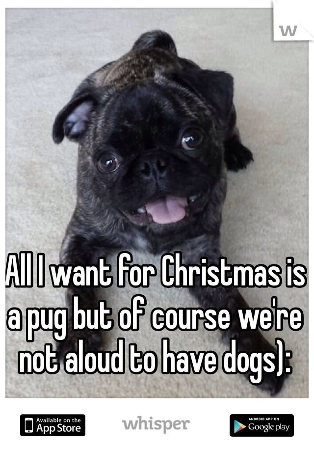 All I want for Christmas is a pug but of course we're not aloud to have dogs):