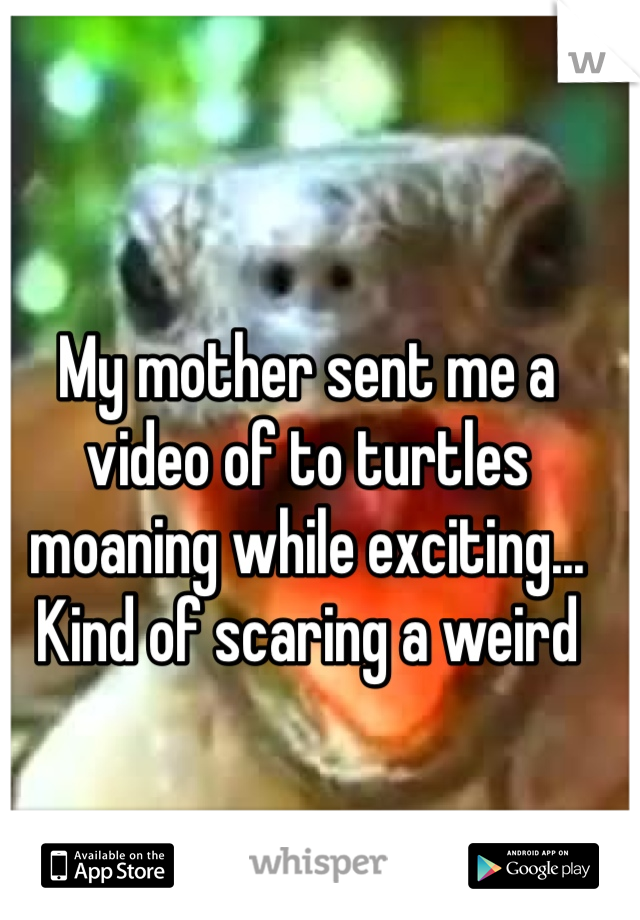 My mother sent me a video of to turtles moaning while exciting... Kind of scaring a weird