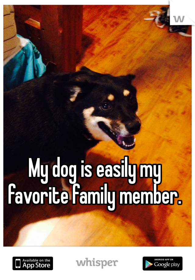My dog is easily my favorite family member.
