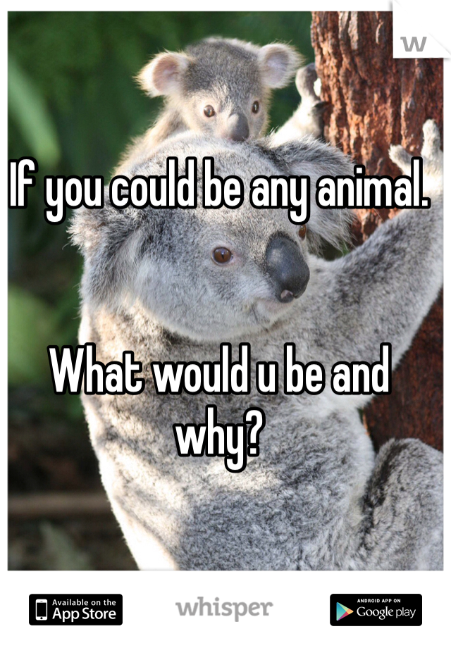If you could be any animal.   What would u be and why?