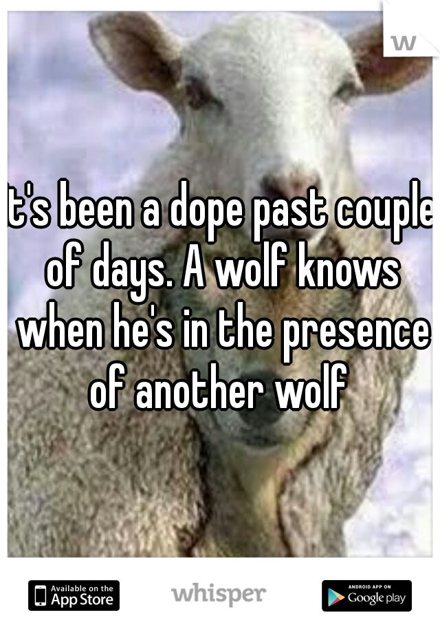 It's been a dope past couple of days. A wolf knows when he's in the presence of another wolf