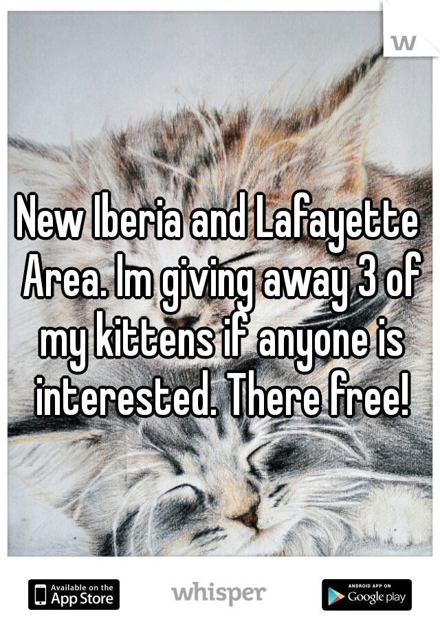 New Iberia and Lafayette Area. Im giving away 3 of my kittens if anyone is interested. There free!