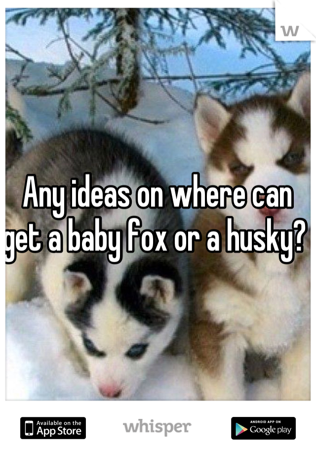 Any ideas on where can get a baby fox or a husky?