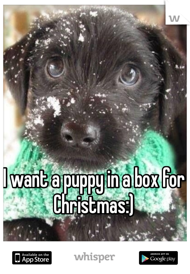 I want a puppy in a box for Christmas:)