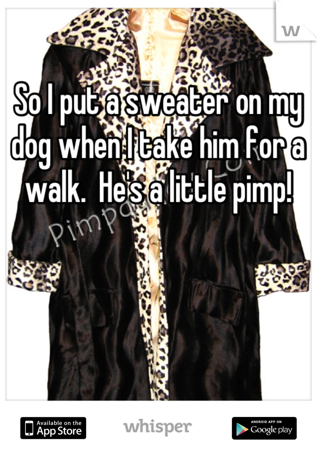 So I put a sweater on my dog when I take him for a walk.  He's a little pimp!