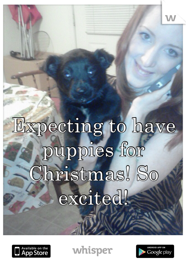 Expecting to have puppies for Christmas! So excited!