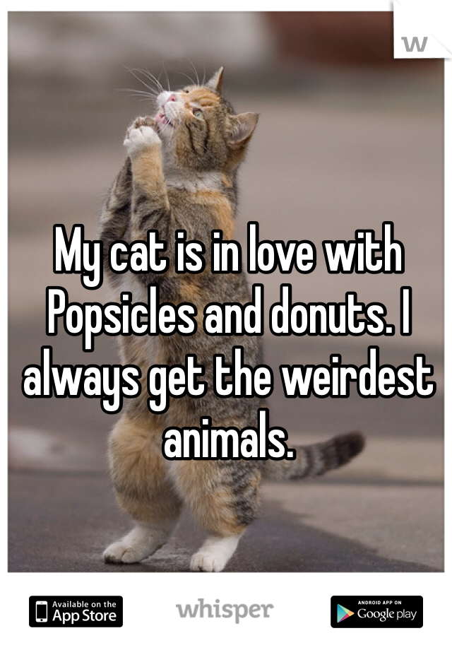 My cat is in love with Popsicles and donuts. I always get the weirdest animals.