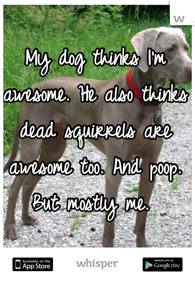 My dog thinks I'm awesome. He also thinks dead squirrels are awesome too. And poop. But mostly me.