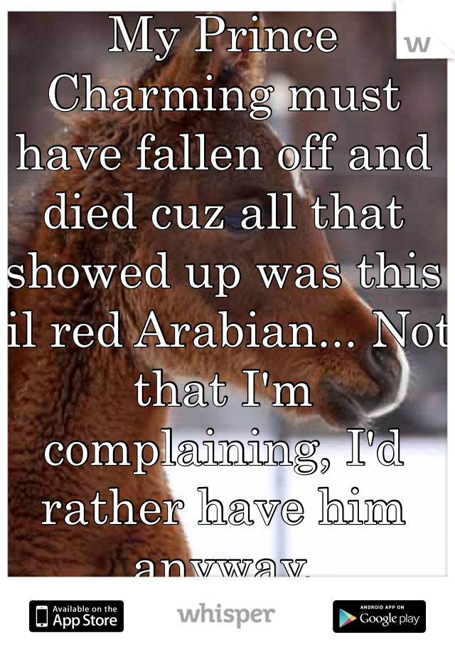My Prince Charming must have fallen off and died cuz all that showed up was this lil red Arabian... Not that I'm complaining, I'd rather have him anyway.