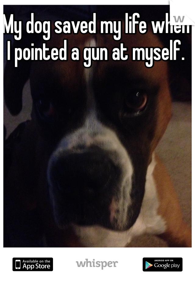 My dog saved my life when  I pointed a gun at myself.
