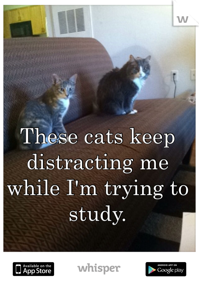 These cats keep distracting me while I'm trying to study.