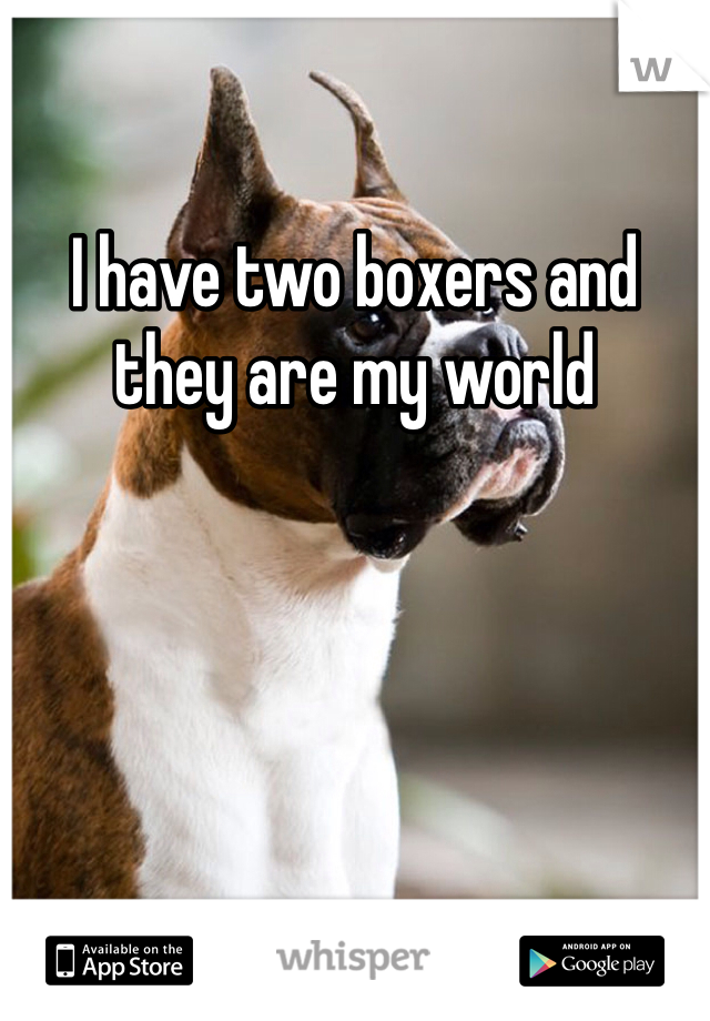 I have two boxers and they are my world