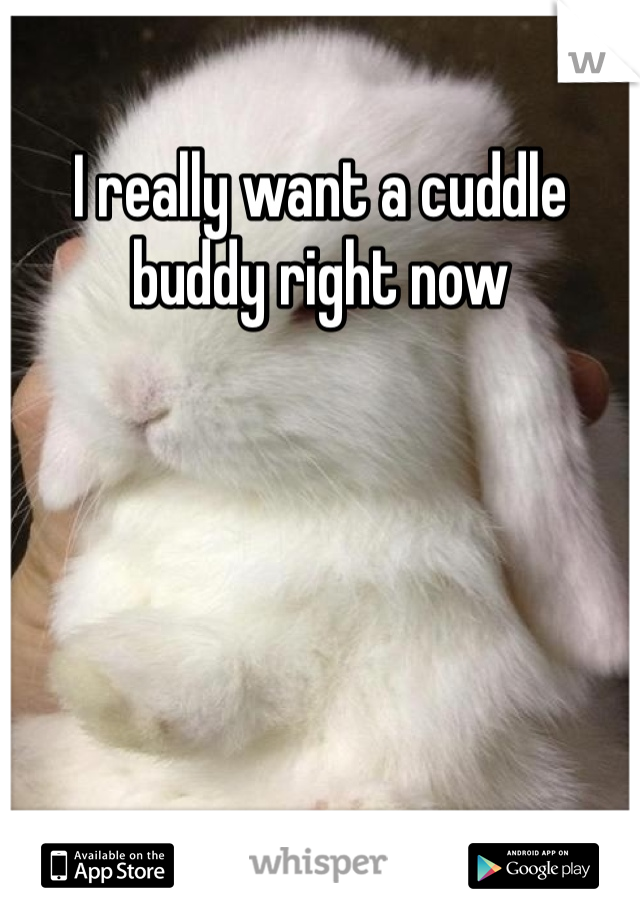 I really want a cuddle buddy right now