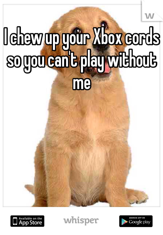 I chew up your Xbox cords so you can't play without me