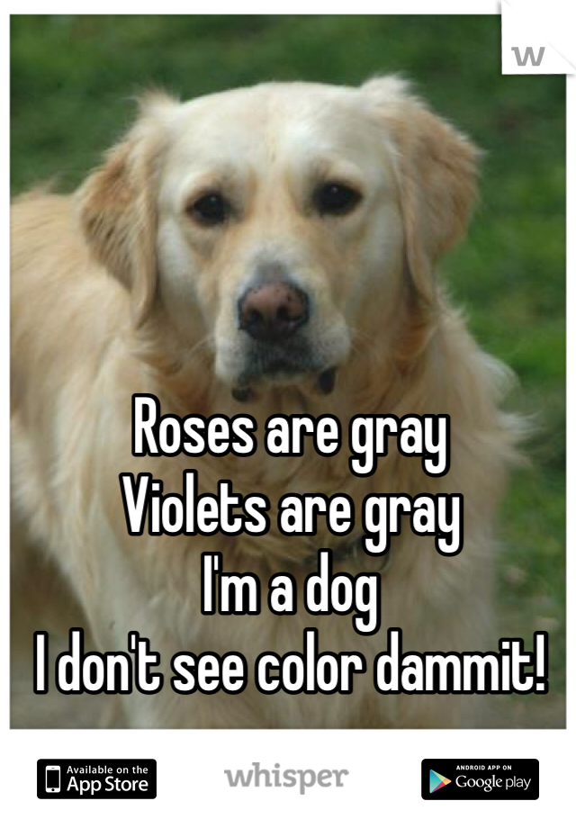 Roses are gray Violets are gray I'm a dog I don't see color dammit!