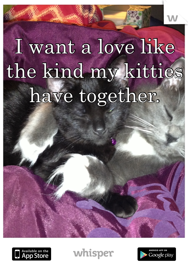 I want a love like the kind my kitties have together.