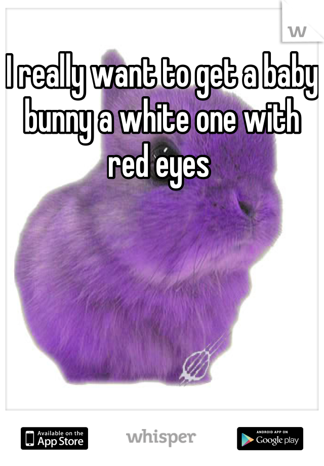 I really want to get a baby bunny a white one with red eyes