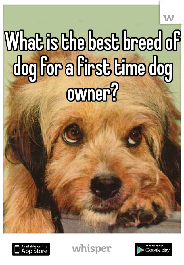 What is the best breed of dog for a first time dog owner?