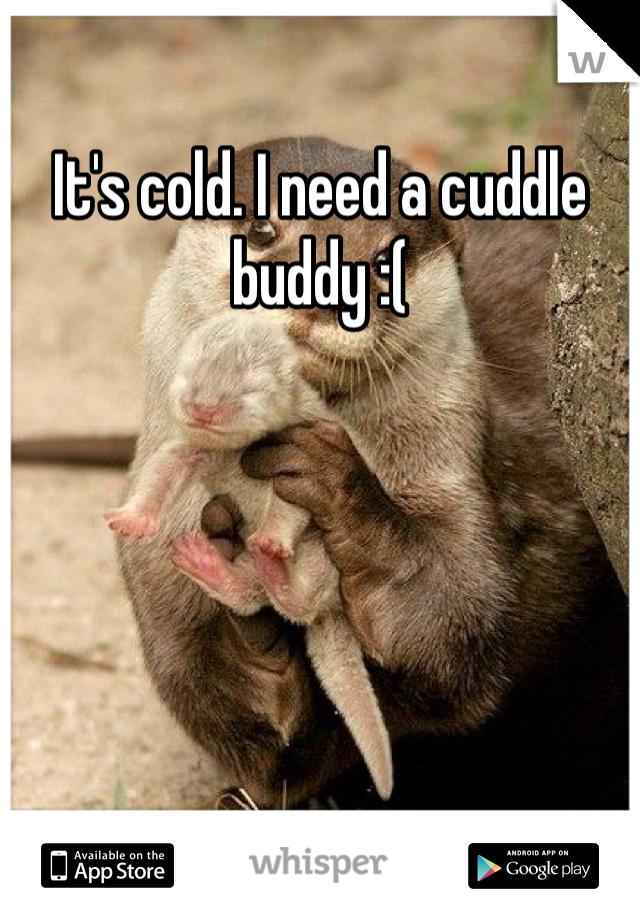 It's cold. I need a cuddle buddy :(