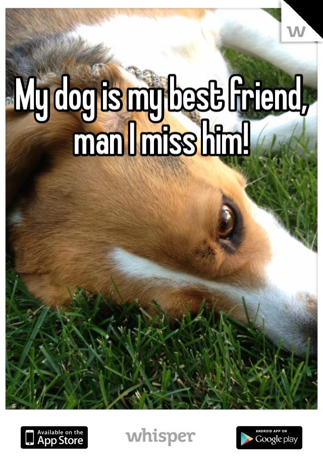 My dog is my best friend, man I miss him!