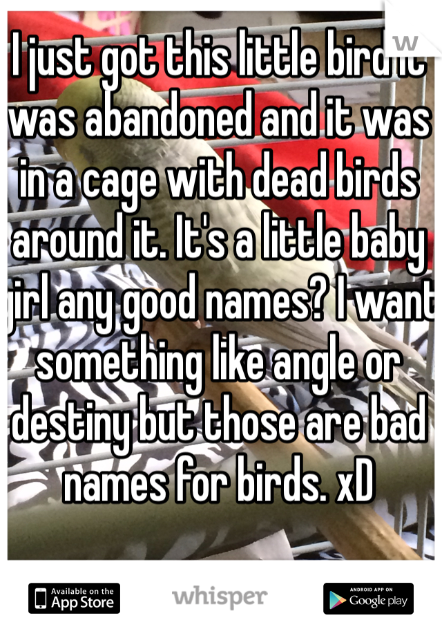 I just got this little bird it was abandoned and it was in a cage with dead birds around it. It's a little baby girl any good names? I want something like angle or destiny but those are bad names for birds. xD