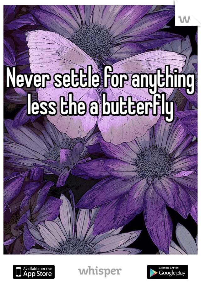 Never settle for anything less the a butterfly