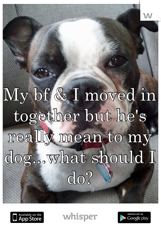 My bf & I moved in together but he's really mean to my dog...what should I do?