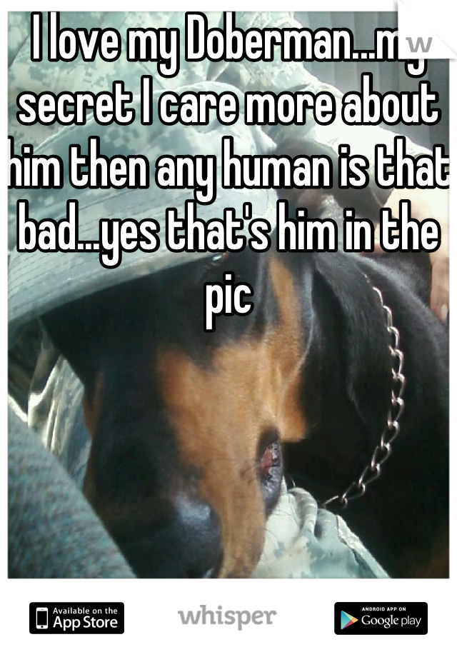 I love my Doberman...my secret I care more about him then any human is that bad...yes that's him in the pic